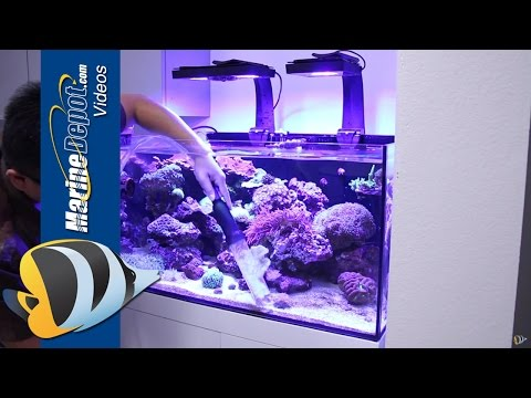 How to Restore a Neglected Reef Aquarium