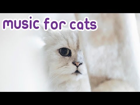 Cat Music! Chill out your kitty! 🐱💤