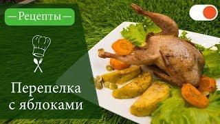 Перепелка с Яблоками в Медовом соусе - Простые рецепты вкусных блюд