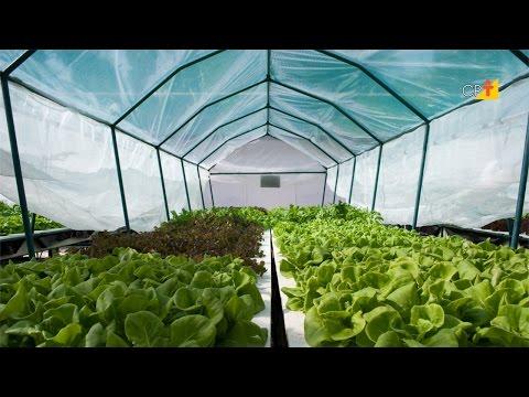 Plasticultura na Agricultura Orgânica - Curso a Distância Cultivo Orgânico de Hortaliças
