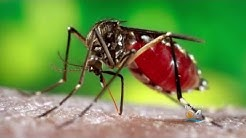 Broward Mosquito Control Planning To Spray Larvacide For Two Weeks