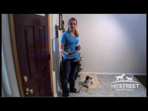 Stop Barking At The Doorbell Youtube