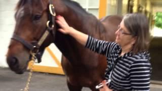 Tours of two Paris KY horse farms