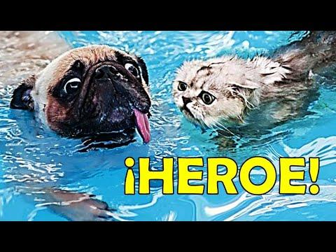 ¡IMPRESIONANTE! Animales que salvaron a otros animales Unbelievable Animals That Saved Other Animals
