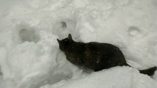 Кошка первый раз на улице/Cat the first time out of the house