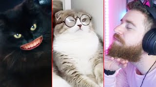 os GATOS do Tik Tok