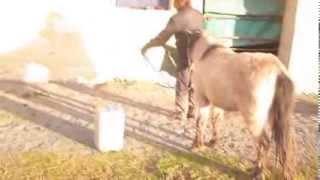 Poulain en action sur parcours Starter d'horse agility.