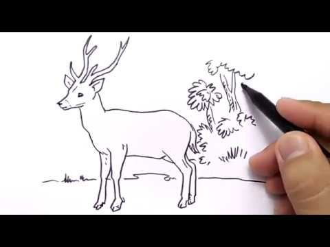 Very Easy How To Draw Deer For Kids Youtube
