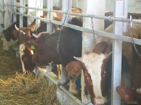 Свое дело: семейное фермерское хозяйство