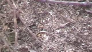 Langerado 2008 Fire Ants