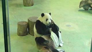 臺北市立動物園 團團與圓圓