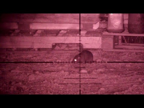 monster-rats-2-pest-control-with-air-rifles.