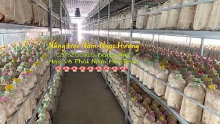 Nhà màng trồng nấm Mối đen Ngọc Hương