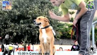 1er Certamen Canino del Garraf Singles Vip Garraf.mpg