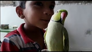 A LITTLE KID ENJOYING WITH | GREEN PARROT | PBI OFFICIAL | Youtube