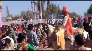 vuclip amazing wedding horse dance in best stunt full hd video 2017