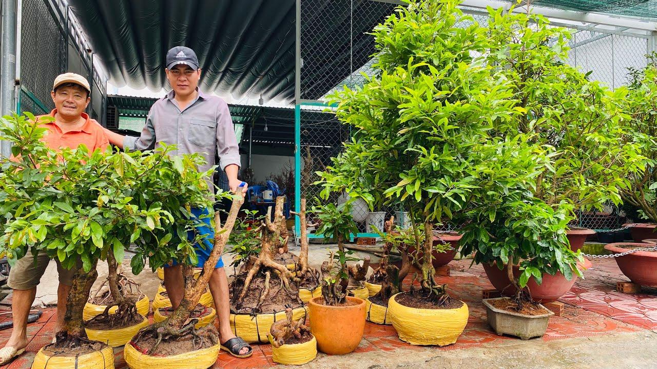 GIAO LƯU CÂY KIỂNG MIỀN TÂY ngày 05/8/2020 👍  0917 359 719 @A. TÁM 😍 bonsai can tho