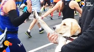 Rescue Dog High Fives Runners at NYC Marathon | The Dodo