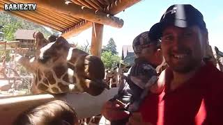 Kids At The Zoo New Compilation 2017 - Funny Babie