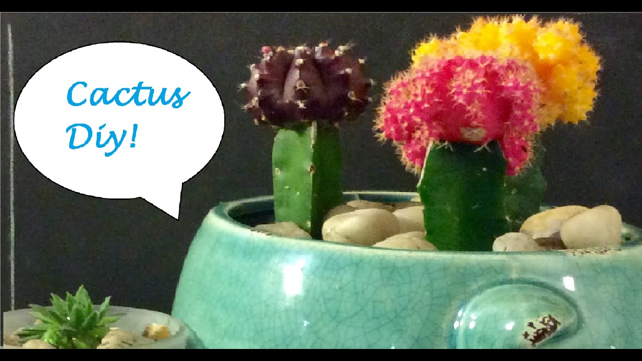 diy house cacti and succulent decor youtube accessories furniture funny
