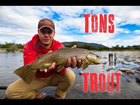 Tons Of Trout | Fishing The Bozeman Area At TRCP Summit | Yellowstone, Madison, Gallatin
