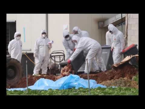 China records 7 bird flu cases, including two deaths this month