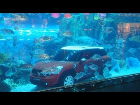 Dubai UAE aquarium 🔥