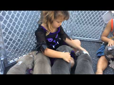 MANMADE KENNELS PUPPIES 5 WEEKS OLD TODAY; KIDS AND PITS; KIDS PLAYING WITH PITBULL