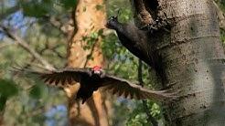 Das Drama der Schwarzspechte im Naturpark Dahme Heideseen