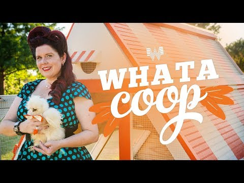 Houston's Morning News - VIDEO: Woman Builds Whataburger Whatacoop For Her Chickens