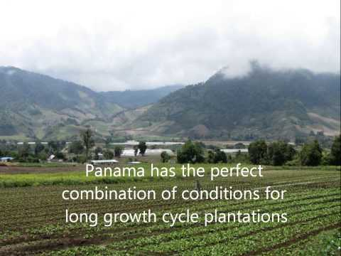 Panama Agricultural Investment in Farmland