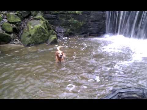 Loki In Waterfall In Knypersley Reservoir Park
