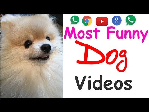 Most Cute Dogs & Puppies | Old Youtube Videos Compilation