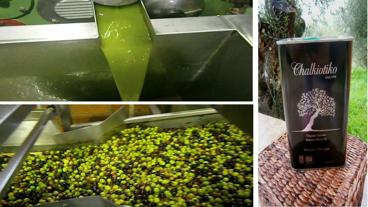 Делать ароматное масло из плодов оливковых деревьев люди научились три тысячелетия назад – и произошло это где-то в палестине. Сегодня отличное оливковое масло купить можно в средиземноморье повсеместно, но его вкус и даже цвет будет всегда отличаться – олива требовательна к почвам,