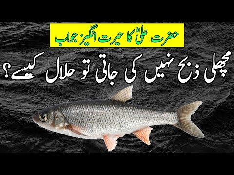 How Is Fish Halal In Islam