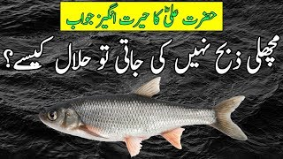 Machli Halal Kese Hai? Hazrat Ali RA Ke Mutabiq | Fish is Halal or Haram? | Tubelight
