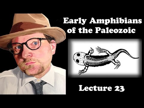 Lecture 23 Early Amphibians Of The Paleozoic