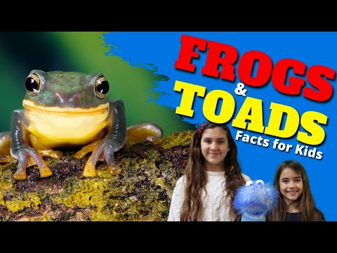 Learn All About Frogs and Toads   Facts for Kids