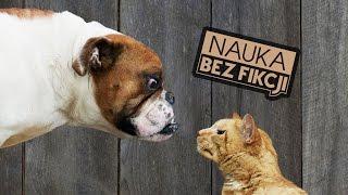 Naukowo o wyższości psów nad kotami | Nauka BEZ fikcji #22