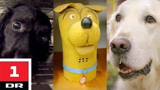 Familiehund vs. narkohund | Versus | DR1 thumbnail