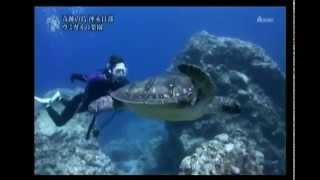 女優の吹石一恵さんが沖永良部島の海カメと一緒に泳ぐ 映像.