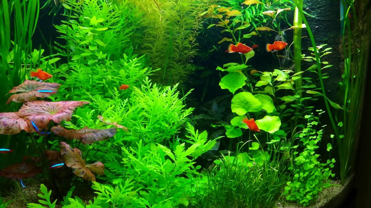 Aquarium Ideeen Inrichting.Aquarium Decoratief Inrichten