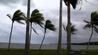 Windy Day/Matheson Hammock Park-2012