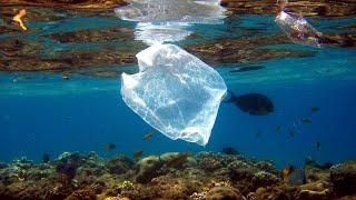 Videografik: Wie Kunststoffe die Umwelt belasten