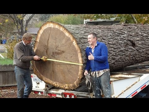 Pacific Coast Lumber-Giant Walnut Tree removal Pacific Coast