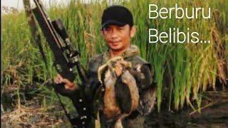 Berburu Burung Blibis di Rawa-rawa Pantura (Shooting Wild Duck)