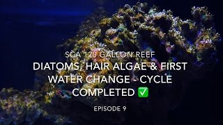 sca 120 gallon reef tank   ep 9   diatoms hair algae first waterchange cycle completed