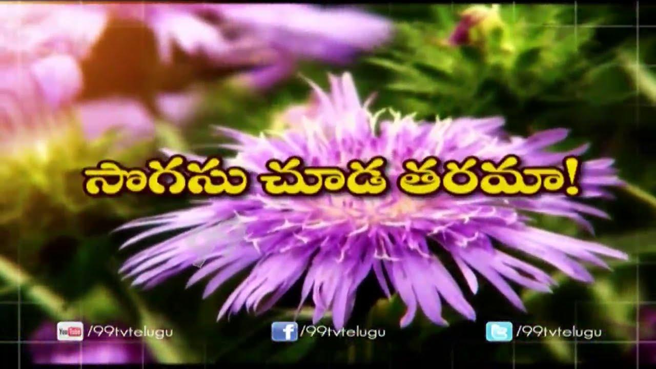 Aster Flower Cultivation Eruvaka 99tv Youtube