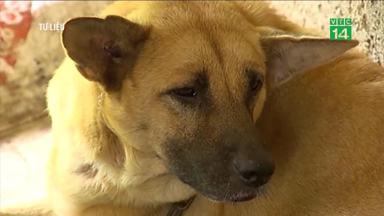 VTC14 | 2 trẻ tử vong do chó dại cắn trong 1 tuần