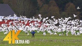 4K Documentary Film